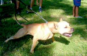 Boston, MA Dog Bite Lawyer